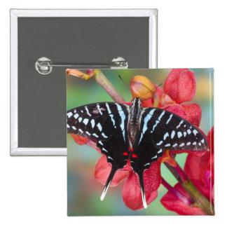 Sammamish, Washington. Tropische Schmetterlinge 48 Anstecknadel