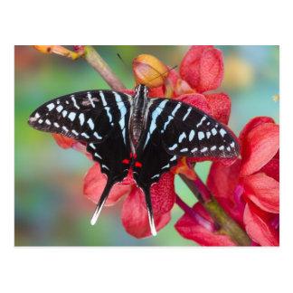 Sammamish, Washington. Tropische Schmetterlinge 48 Postkarte
