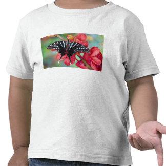 Sammamish, Washington. Tropische Schmetterlinge 48 Shirt