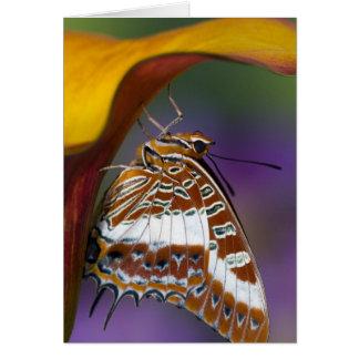 Sammamish, Washington. Tropische Schmetterlinge 4 Grußkarte