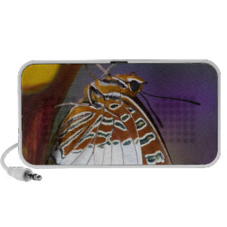 Sammamish, Washington. Tropische Schmetterlinge 4 Tragbare Speaker