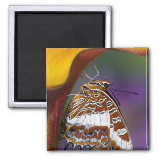 Sammamish, Washington. Tropische Schmetterlinge 4 Kühlschrankmagnete