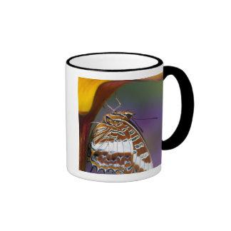 Sammamish, Washington. Tropische Schmetterlinge 4 Teetasse