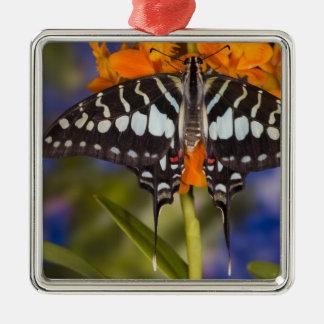 Sammamish, Washington. Tropische Schmetterlinge 50 Quadratisches Silberfarbenes Ornament