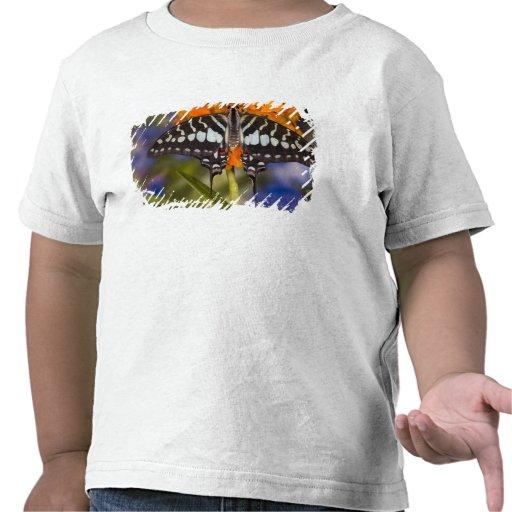 Sammamish, Washington. Tropische Schmetterlinge 50 T-shirt