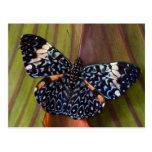 Sammamish, Washington. Tropische Schmetterlinge 54 Postkarte