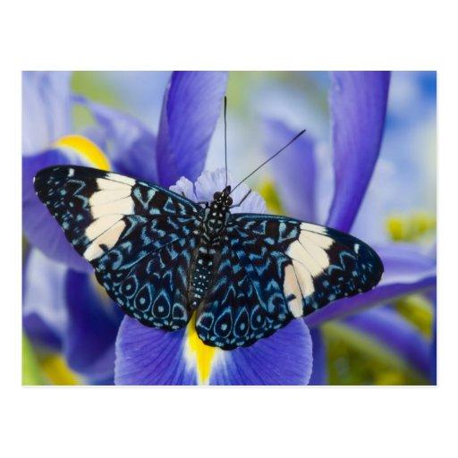 Sammamish, Washington. Tropische Schmetterlinge 56 Postkarten