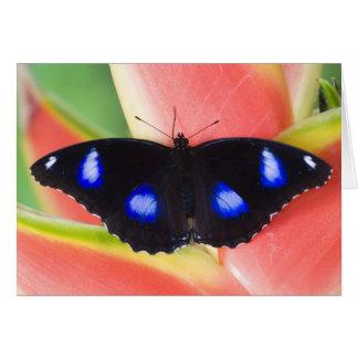 Sammamish, Washington. Tropische Schmetterlinge 58 Karten