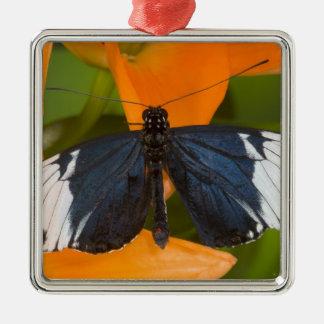 Sammamish, Washington. Tropische Schmetterlinge 59 Quadratisches Silberfarbenes Ornament