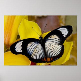 Sammamish, Washington. Tropische Schmetterlinge 62 Poster