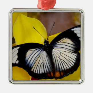 Sammamish, Washington. Tropische Schmetterlinge 62 Quadratisches Silberfarbenes Ornament