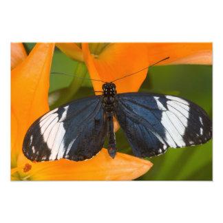 Sammamish, Washington. Tropische Schmetterlinge 63 Foto Drucke