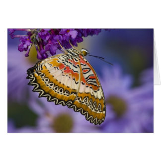 Sammamish, Washington. Tropische Schmetterlinge 65 Grußkarte