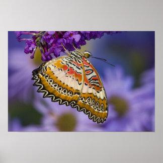 Sammamish, Washington. Tropische Schmetterlinge 65 Plakatdruck