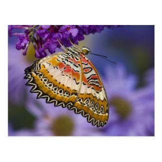 Sammamish, Washington. Tropische Schmetterlinge 65 Postkarte