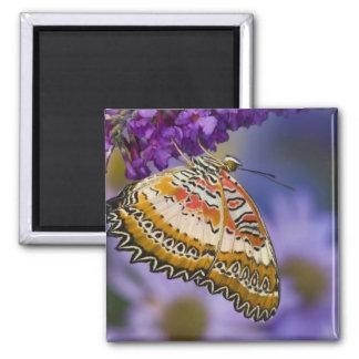 Sammamish, Washington. Tropische Schmetterlinge 65 Quadratischer Magnet