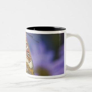 Sammamish, Washington. Tropische Schmetterlinge 65 Kaffeetasse