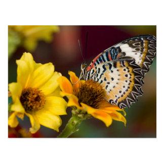 Sammamish, Washington. Tropische Schmetterlinge 66 Postkarte