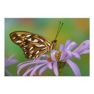 Sammamish, Washington. Tropische Schmetterlinge 67 Fotografie