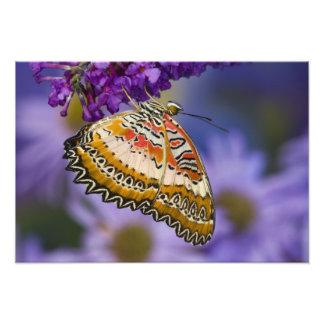 Sammamish, Washington. Tropische Schmetterlinge 7 Photodruck
