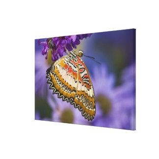 Sammamish, Washington. Tropische Schmetterlinge 7 Galerie Faltleinwand