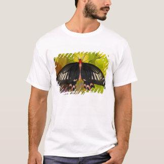 Sammamish, Washington. Tropische Schmetterlinge 9 T-Shirt