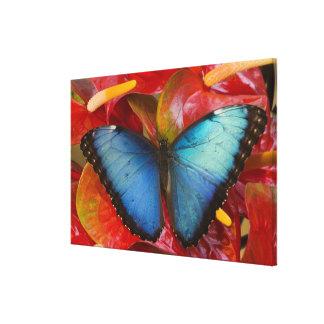 Sammamish Washington tropischer Schmetterling 10 Gespannter Galerie Druck