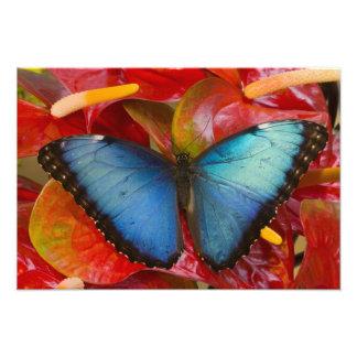 Sammamish Washington tropischer Schmetterling 4 Kunst Fotos