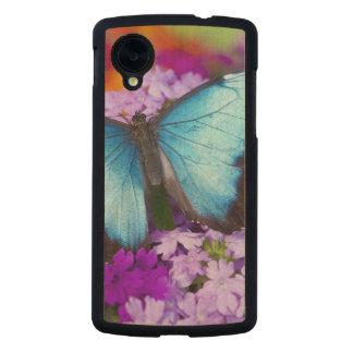 Sammamish Washington tropischer Schmetterling 7 Carved® Nexus 5 Hülle Ahorn