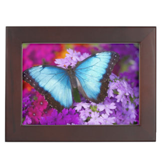 Sammamish Washington tropischer Schmetterling 7 Erinnerungsdose