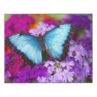 Sammamish Washington tropischer Schmetterling 7