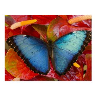 Sammamish Washington tropischer Schmetterling 8 Postkarte