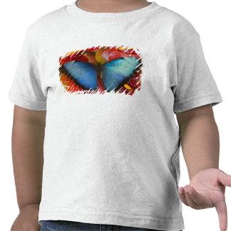 Sammamish Washington tropischer Schmetterling 8 Shirts