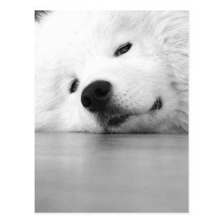 Samoyed-Foto-Hundeweiß Postkarte