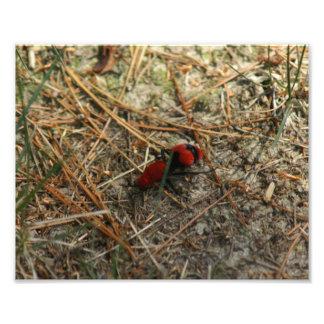 Samt-Ameisen-Foto Druck