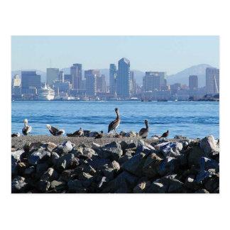 San Diego Pelikan-Vogel-Stadt-Skyline-Wasser Postkarte