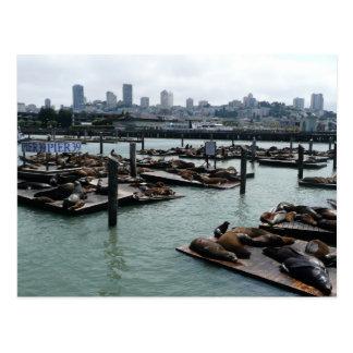San Francisco und Seelöwe-Stadt-Skyline des Postkarte