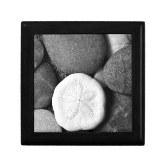 Sand-Dollar auf Strand-Felsen Schmuckschachtel
