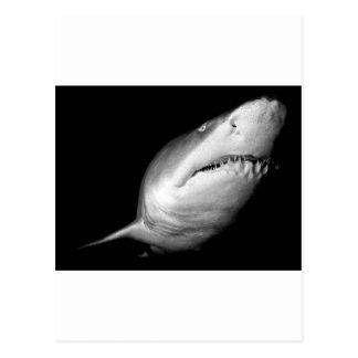Sand-Tiger-Haifisch Postkarte