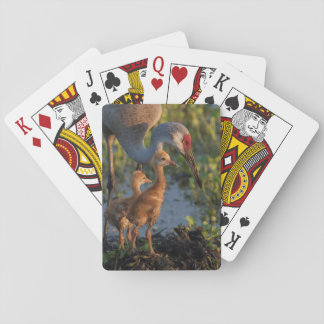 Sandhill Kran mit Küken, Florida Spielkarten