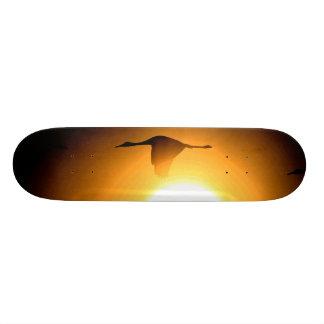 Sandhill Kran-Vogel-Tier-Tier-Fotografie 20,6 Cm Skateboard Deck