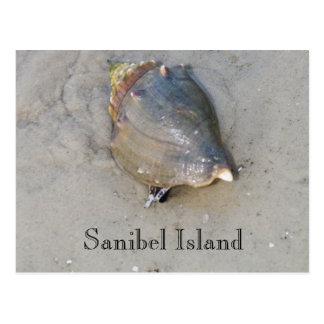 Sanibel Muschel Postkarte