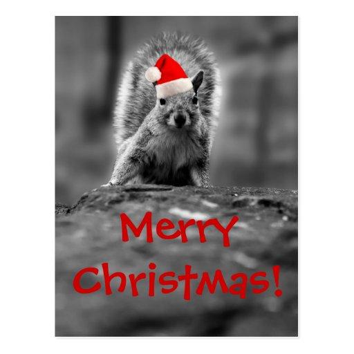 Sankt-Eichhörnchen-frohe Weihnacht-Postkarte