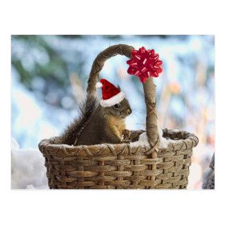 Sankt-Eichhörnchen im Schnee Postkarte