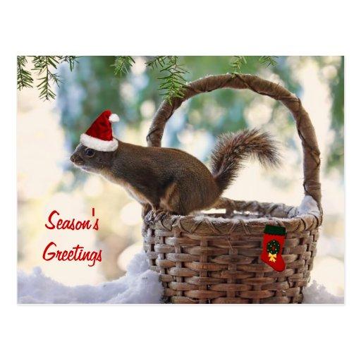 Sankt-Eichhörnchen im Snowy-Weihnachtskorb Postkarte