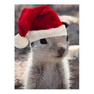 Sankt-Eichhörnchen-Postkarte Postkarte