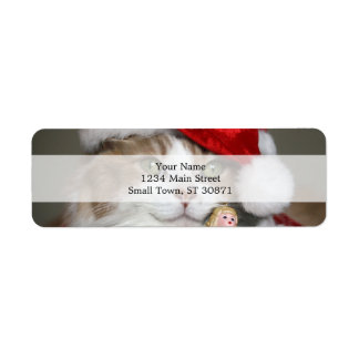 Sankt-Katze - Weihnachtskatze - niedliche Kätzchen