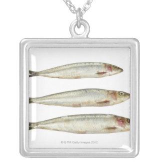 Sardinen (Pilchards) 2 Versilberte Kette