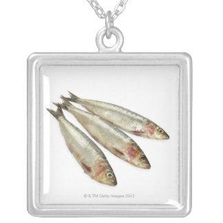Sardinen (Pilchards) Versilberte Kette