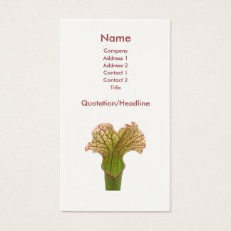 Sarracenia-Krug-Pflanze Visitenkarte